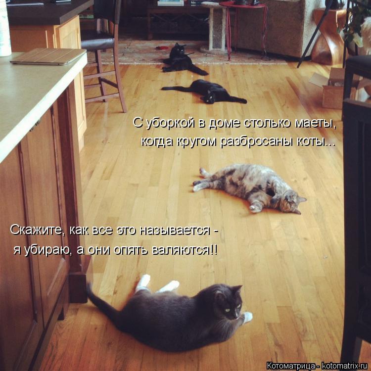 Котоматрица: С уборкой в доме столько маеты, когда кругом разбросаны коты... Скажите, как все это называется - я убираю, а они опять валяются!!