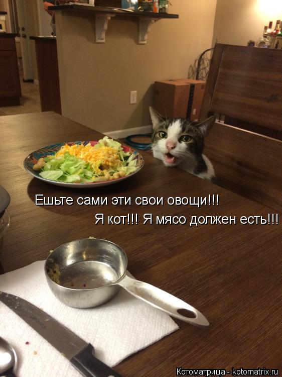 Котоматрица: Ешьте сами эти свои овощи!!! Я кот!!! Я мясо должен есть!!!
