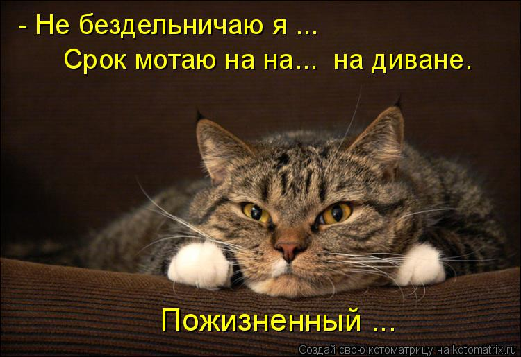 Котоматрица: - Не бездельничаю я ... Срок мотаю на на...  на диване. Пожизненный ...