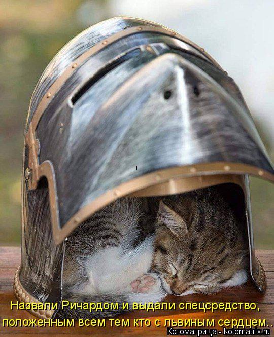 Котоматрица: Назвали Ричардом и выдали спецсредство, положенным всем тем кто с львиным сердцем...