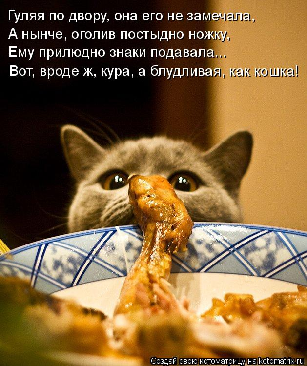 Котоматрица: Гуляя по двору, она его не замечала, А нынче, оголив постыдно ножку, Ему прилюдно знаки подавала... Вот, вроде ж, кура, а блудливая, как кошка!