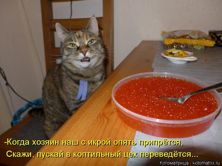 Котоматрица: -Когда хозяин наш с икрой опять припрётся, Скажи, пускай в коптильный цех переведётся...