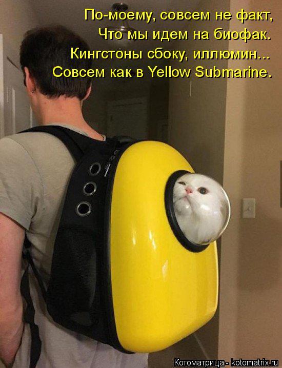 Котоматрица: По-моему, совсем не факт, Что мы идем на биофак. Кингстоны сбоку, иллюмин... Совсем как в Yellow Submarine.