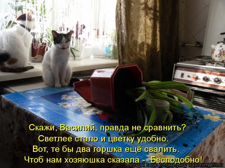 Котоматрица: Скажи, Василий, правда не сравнить? Светлее стало и цветку удобно. Вот, те бы два горшка ещё свалить. Чтоб нам хозяюшка сказала -  Бесподобно!
