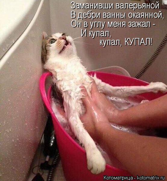Котоматрица: Заманивши валерьяной В дебри ванны окаянной, Он в углу меня зажал -  И купал, купал, КУПАЛ!