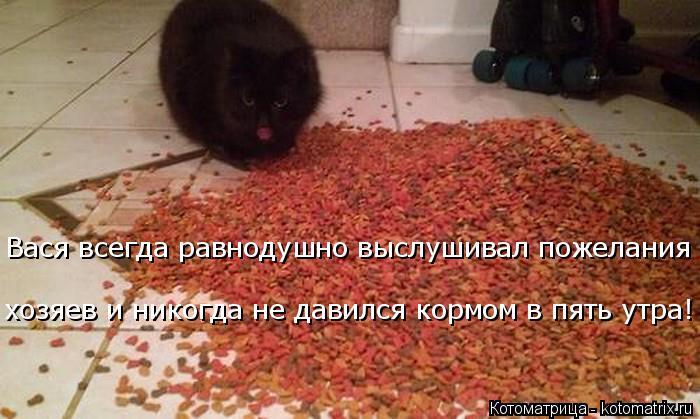 Котоматрица: Вася всегда равнодушно выслушивал пожелания хозяев и никогда не давился кормом в пять утра!
