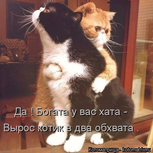 Котоматрица: Да ! Богата у вас хата - Вырос котик в два обхвата .