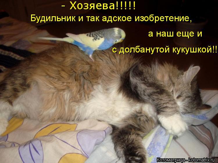 Котоматрица: - Хозяева!!!!! Будильник и так адское изобретение,  а наш еще и  с долбанутой кукушкой!!!