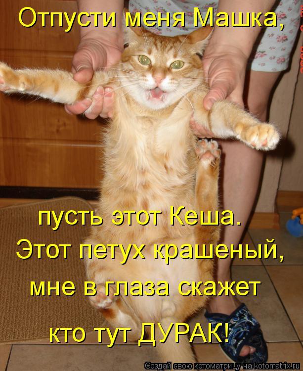 Котоматрица: Отпусти меня Машка, пусть этот Кеша. Этот петух крашеный, мне в глаза скажет кто тут ДУРАК!