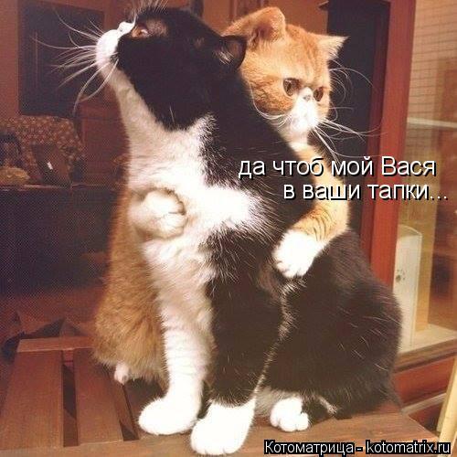 Котоматрица: да чтоб мой Вася в ваши тапки...