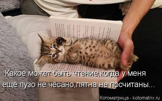 Котоматрица: Какое может быть чтение,когда у меня ещё пузо не чёсано,пятна не посчитаны...