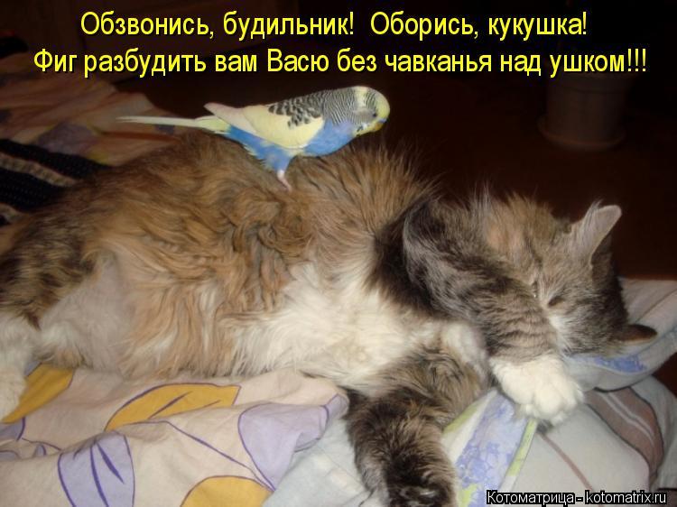 Котоматрица: Обзвонись, будильник!  Оборись, кукушка! Фиг разбудить вам Васю без чавканья над ушком!!!