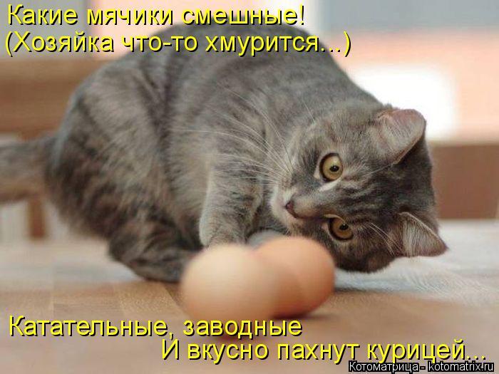Котоматрица: Какие мячики смешные! (Хозяйка что-то хмурится...) Катательные, заводные И вкусно пахнут курицей...