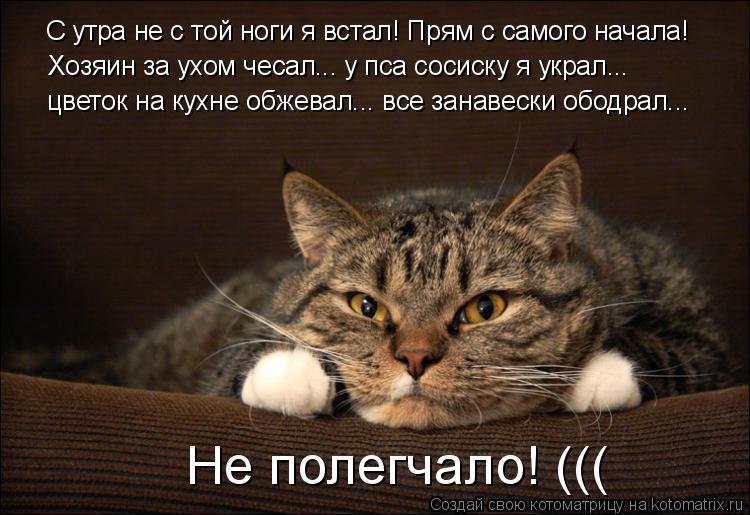 Котоматрица: С утра не с той ноги я встал! Прям с самого начала! Хозяин за ухом чесал... у пса сосиску я украл...  цветок на кухне обжевал... все занавески обод