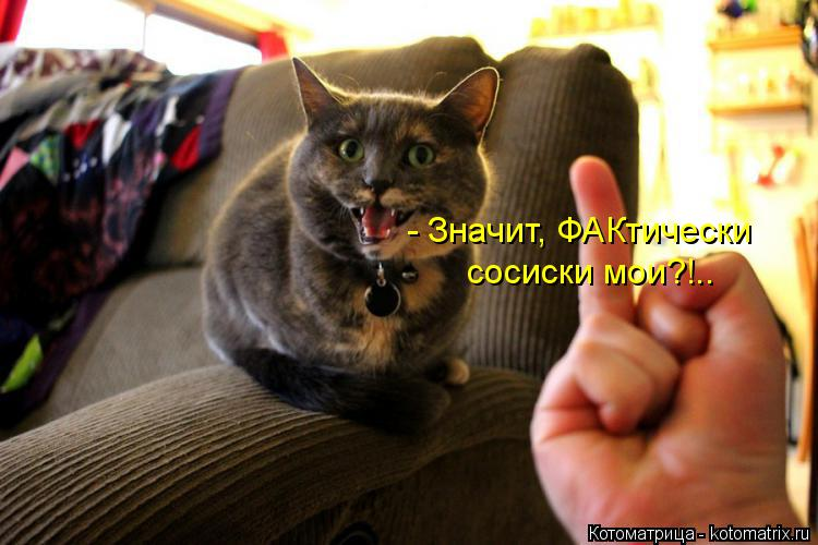 Котоматрица: - Значит, ФАКтически сосиски мои?!..
