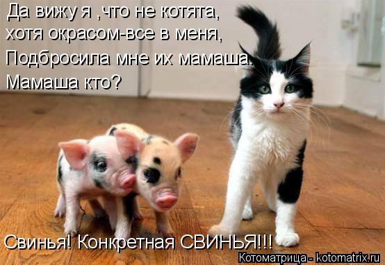 Котоматрица: Да вижу я ,что не котята, хотя окрасом-все в меня, Подбросила мне их мамаша. Мамаша кто? Свинья! Конкретная СВИНЬЯ!!!