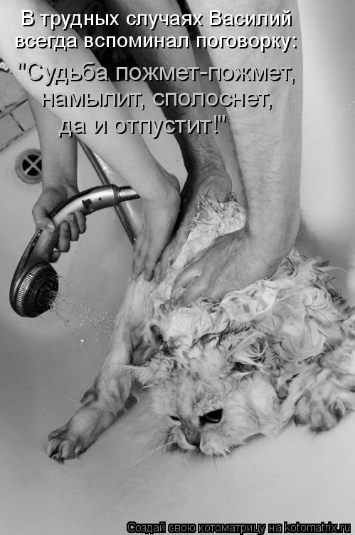 """Котоматрица: В трудных случаях Василий  всегда вспоминал поговорку: """"Судьба пожмет-пожмет, намылит, сполоснет, да и отпустит!"""""""