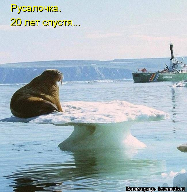 http://kotomatrix.ru/images/lolz/2016/05/08/kotomatritsa_H.jpg