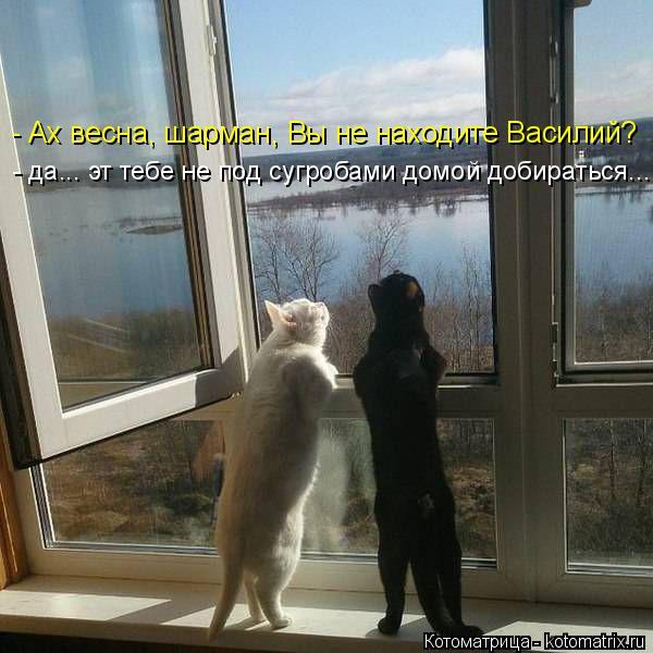 Котоматрица: - Ах весна, шарман, Вы не находите Василий? - да... эт тебе не под сугробами домой добираться...