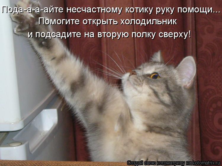 Котоматрица: Пода-а-а-айте несчастному котику руку помощи... Помогите открыть холодильник и подсадите на вторую полку сверху!