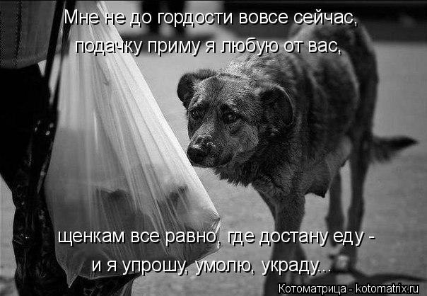Котоматрица: щенкам все равно, где достану еду -  и я упрошу, умолю, украду... Мне не до гордости вовсе сейчас, подачку приму я любую от вас,