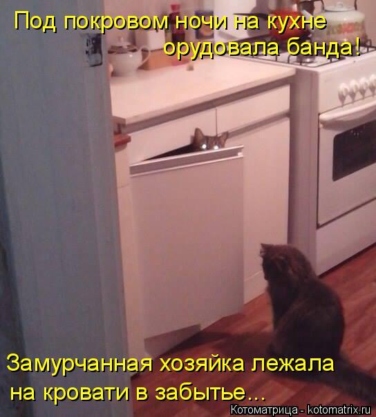 Котоматрица: Под покровом ночи на кухне орудовала банда! Замурчанная хозяйка лежала  на кровати в забытье...
