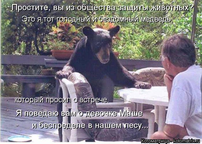 Котоматрица: и беспределе в нашем лесу... Простите, вы из общества защиты животных? Я поведаю вам о девочке Маше Это я тот голодный и бездомный медведь, ко