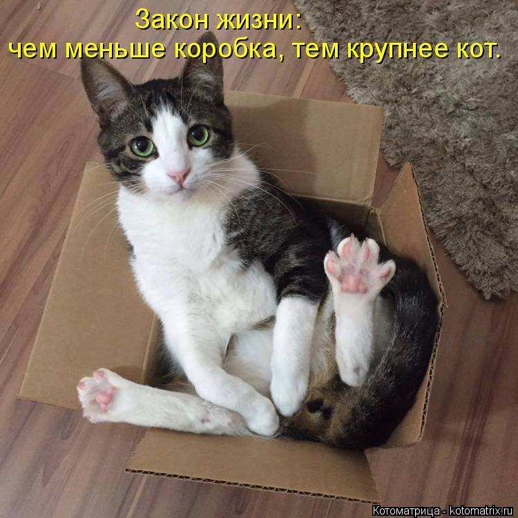Котоматрица: Закон жизни: чем меньше коробка, тем крупнее кот.