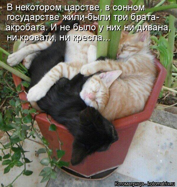 Котоматрица: В некотором царстве, в сонном государстве жили-были три брата- акробата. И не было у них ни дивана,  ни кровати, ни кресла...