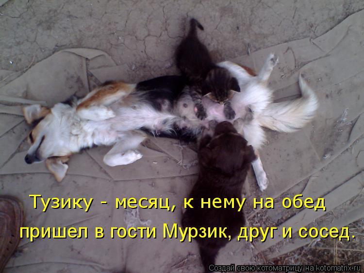 Котоматрица: Тузику - месяц, к нему на обед  пришел в гости Мурзик, друг и сосед.