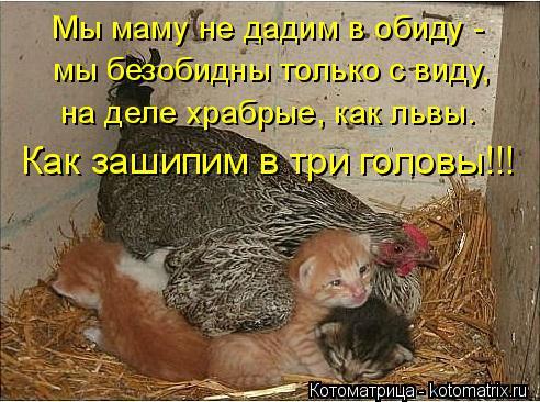 Котоматрица: Мы маму не дадим в обиду -  мы безобидны только с виду, на деле храбрые, как львы. Как зашипим в три головы!!!