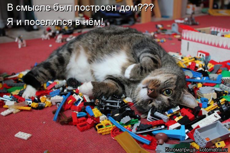 Котоматрица: В смысле был построен дом??? Я и поселился в нём!
