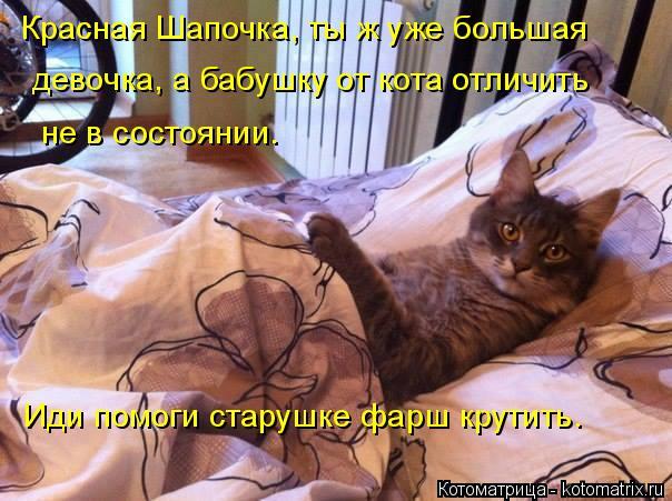 Котоматрица: Красная Шапочка, ты ж уже большая девочка, а бабушку от кота отличить не в состоянии.  Иди помоги старушке фарш крутить.
