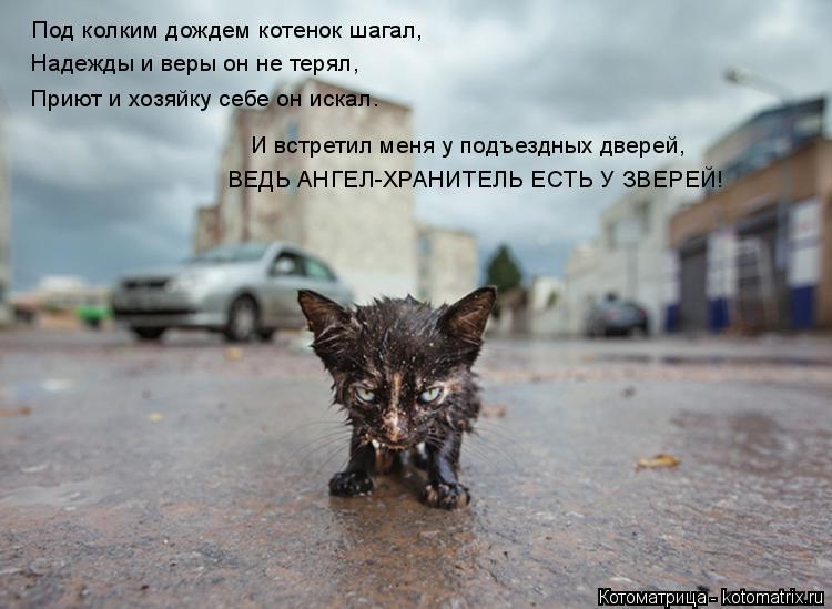 Котоматрица: Под колким дождем котенок шагал, Надежды и веры он не терял, Приют и хозяйку себе он искал. И встретил меня у подъездных дверей, ВЕДЬ АНГЕЛ-ХР