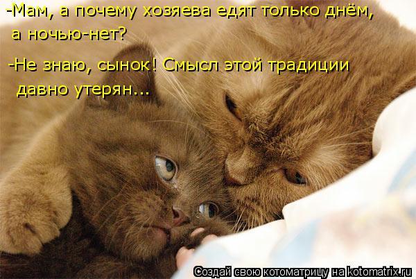 Котоматрица: -Мам, а почему хозяева едят только днём, -Не знаю, сынок! Смысл этой традиции  давно утерян...  а ночью-нет?