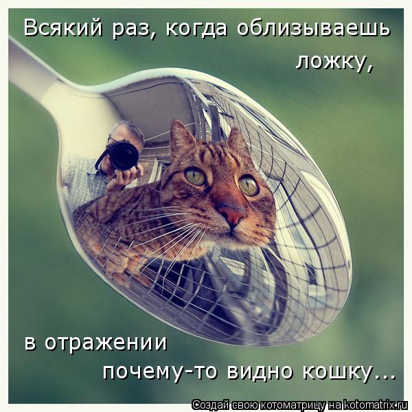 Котоматрица: Всякий раз, когда облизываешь  ложку, в отражении  почему-то видно кошку...