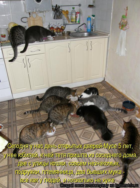 Котоматрица: две с улицы кошки, совсем незнакомых, все как у людей, и нисколько не хуже. подружки, племянница, два бывших мужа - у нее юбилей, к ней тетя при