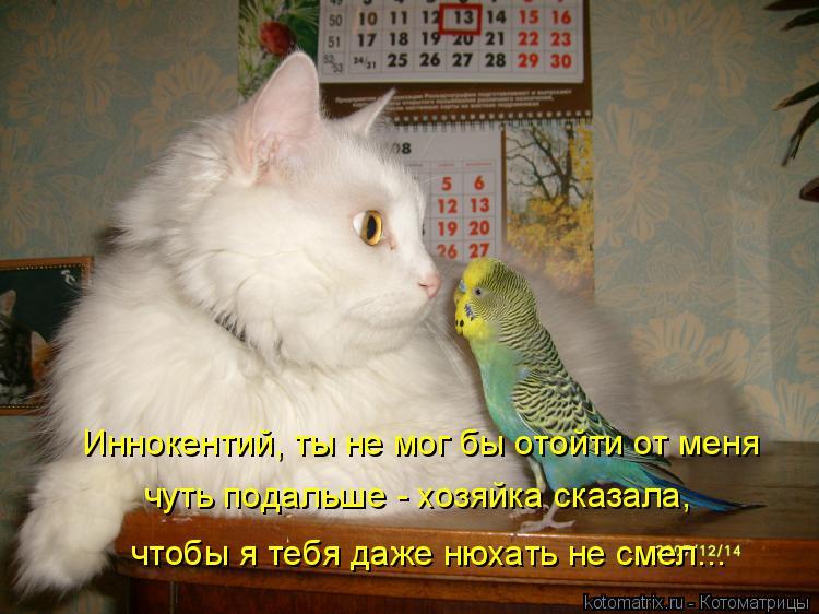 Котоматрица: Иннокентий, ты не мог бы отойти от меня чтобы я тебя даже нюхать не смел... чуть подальше - хозяйка сказала,