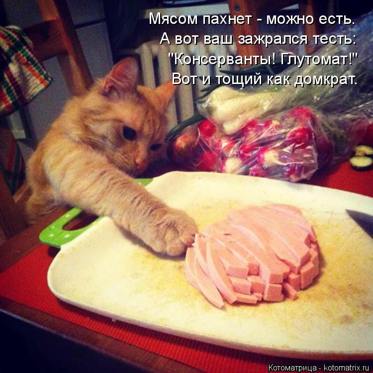 """Котоматрица: Мясом пахнет - можно есть. А вот ваш зажрался тесть: """"Консерванты! Глутомат!"""" Вот и тощий как домкрат."""
