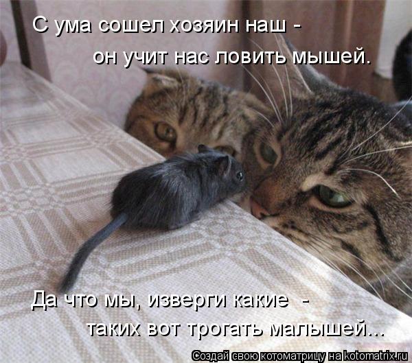 Котоматрица: он учит нас ловить мышей. таких вот трогать малышей... Да что мы, изверги какие  -  С ума сошел хозяин наш -