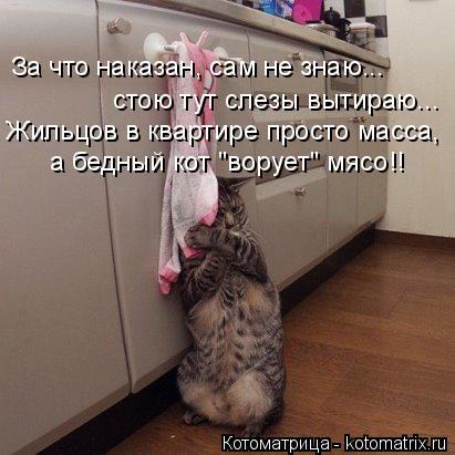 """Котоматрица: За что наказан, сам не знаю... стою тут слезы вытираю... Жильцов в квартире просто масса, а бедный кот """"ворует"""" мясо!!"""