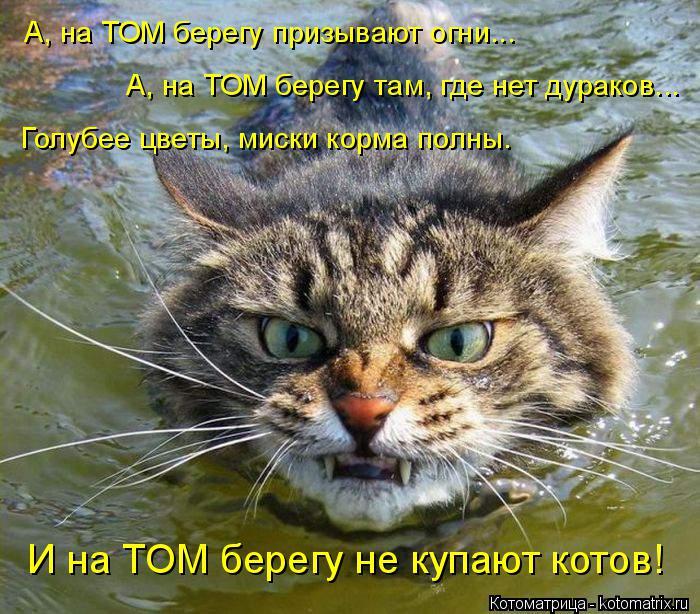 Котоматрица: А, на ТОМ берегу призывают огни...  А, на ТОМ берегу там, где нет дураков...  Голубее цветы, миски корма полны. И на ТОМ берегу не купают котов!