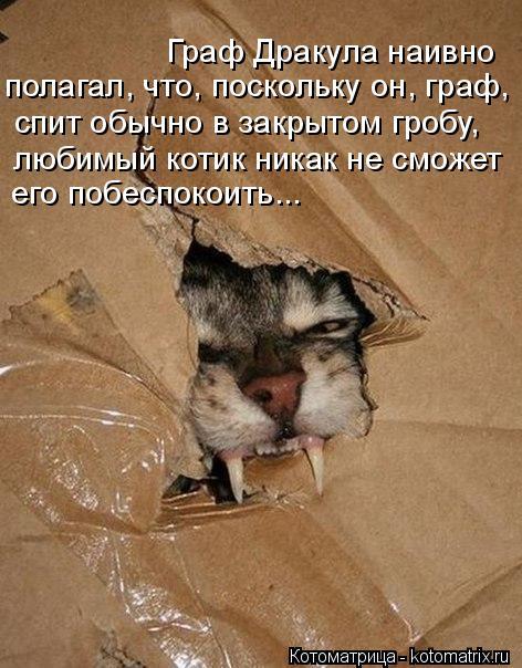 Котоматрица: Граф Дракула наивно  полагал, что, поскольку он, граф,  спит обычно в закрытом гробу, любимый котик никак не сможет его побеспокоить...