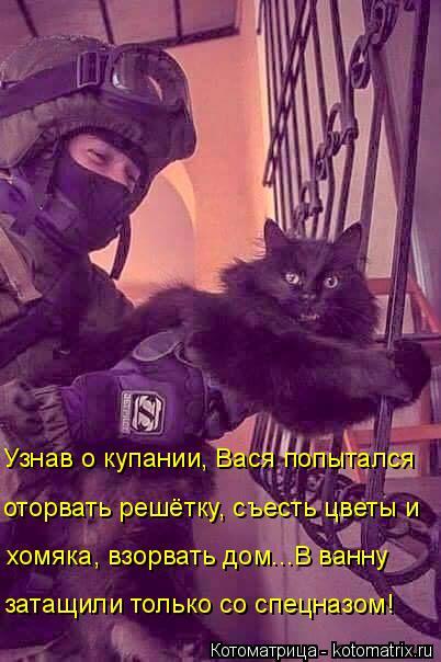 Котоматрица: Узнав о купании, Вася попытался  оторвать решётку, съесть цветы и хомяка, взорвать дом...В ванну затащили только со спецназом!