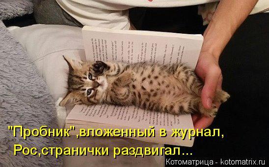"""Котоматрица: Рос,странички раздвигал... """"Пробник"""",вложенный в журнал,"""