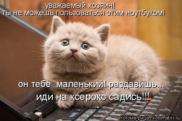 Котоматрица: ты не можешь пользоваться этим ноутбуком! уважаемый хозяин! он тебе  маленький! раздавишь... иди на ксерокс садись!!!