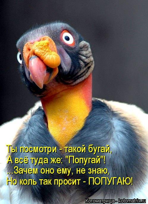 """Котоматрица: Ты посмотри - такой бугай, А всё туда же: """"Попугай""""! ...Зачем оно ему, не знаю, Но коль так просит - ПОПУГАЮ!"""