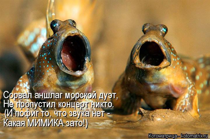 Котоматрица: Сорвал аншлаг морской дуэт, Не пропустил концерт никто. (И пофиг то, что звука нет -  Какая МИМИКА зато!)