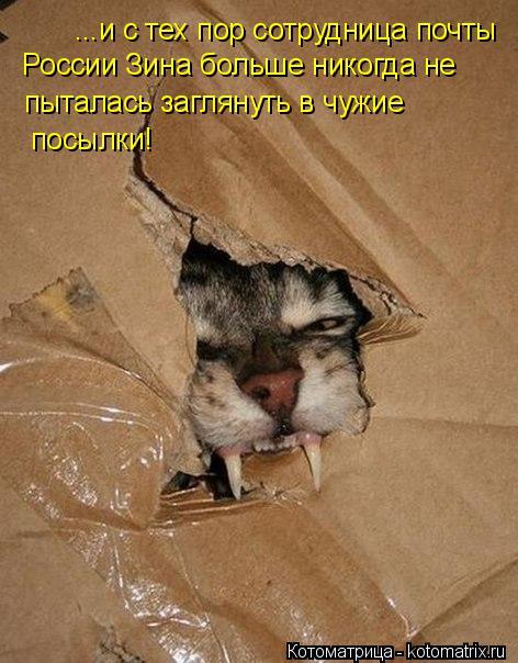 http://kotomatrix.ru/images/lolz/2016/05/20/kotomatritsa_z.jpg