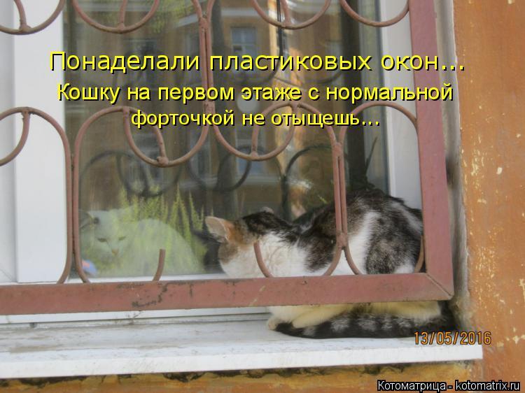 Котоматрица: Понаделали пластиковых окон... Кошку на первом этаже с нормальной форточкой не отыщешь...